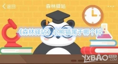 森林驿站问题:小熊猫属于哪个科